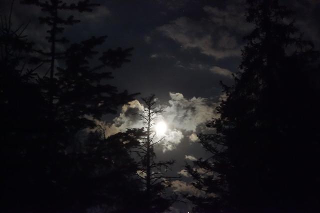 Vollmond im Wald
