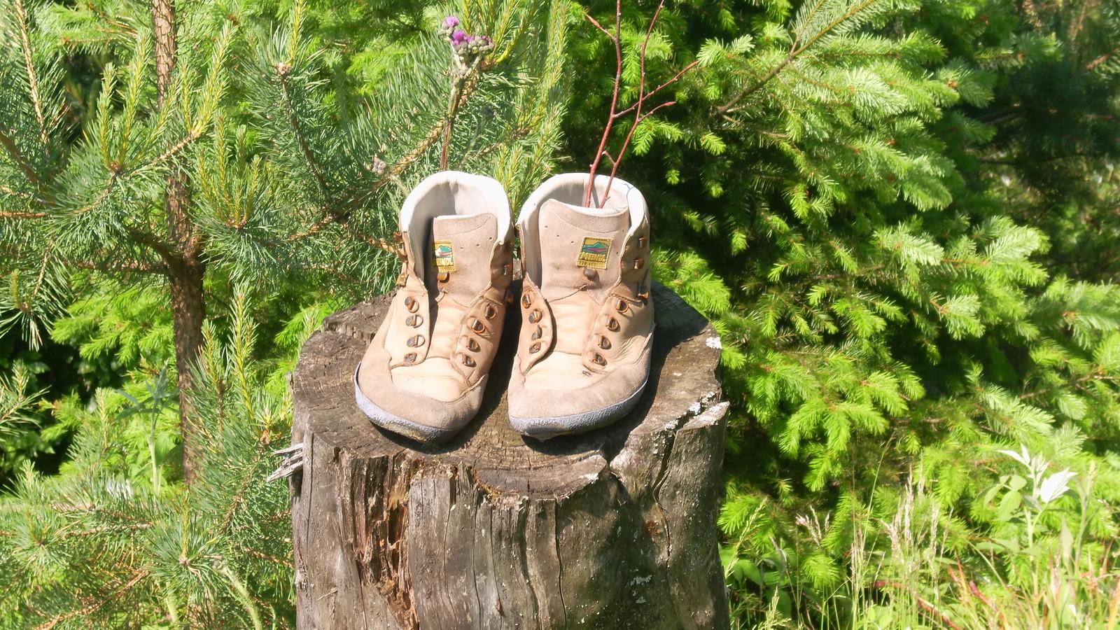 Schuhe auf Baumstamm