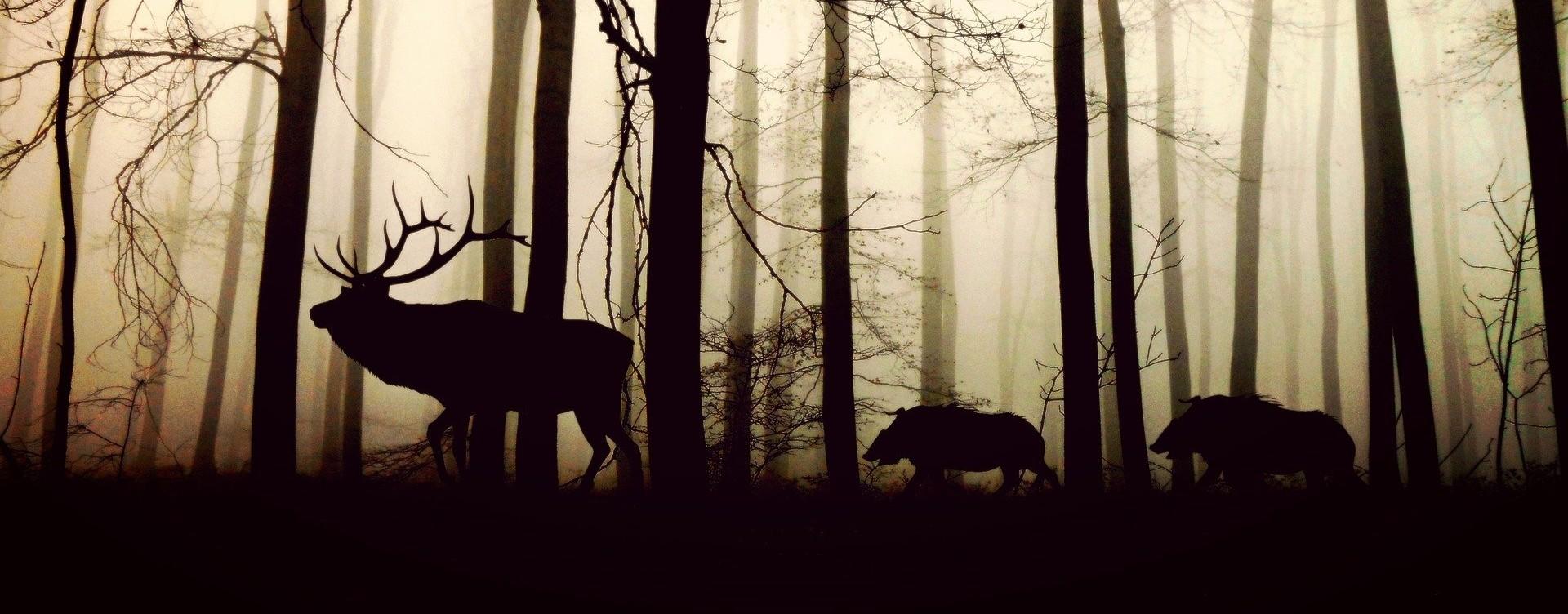 Wildwochen im Albtal