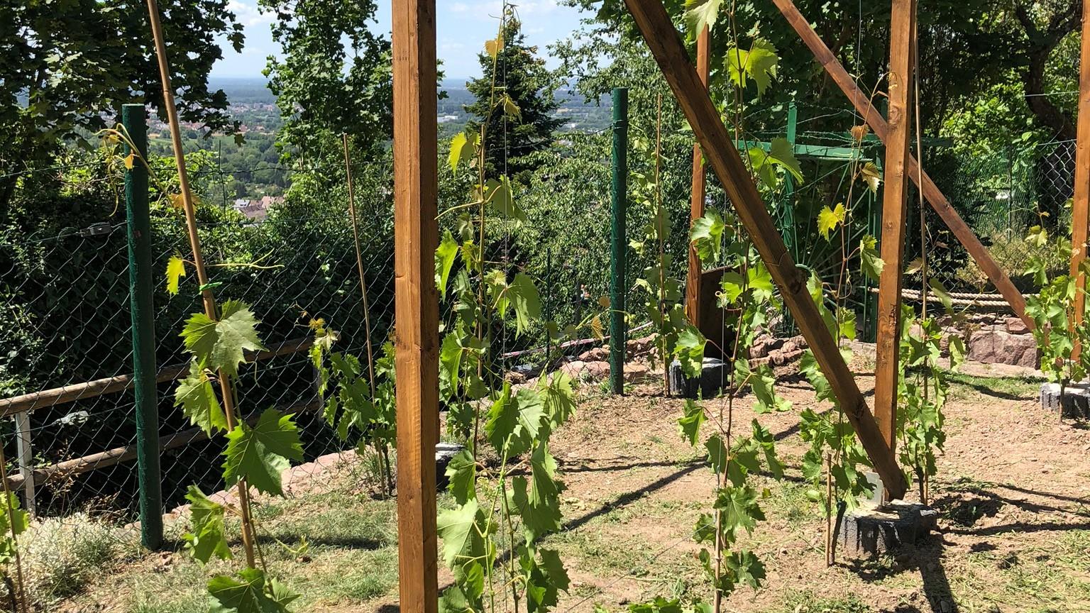 Weincampus Fritsche