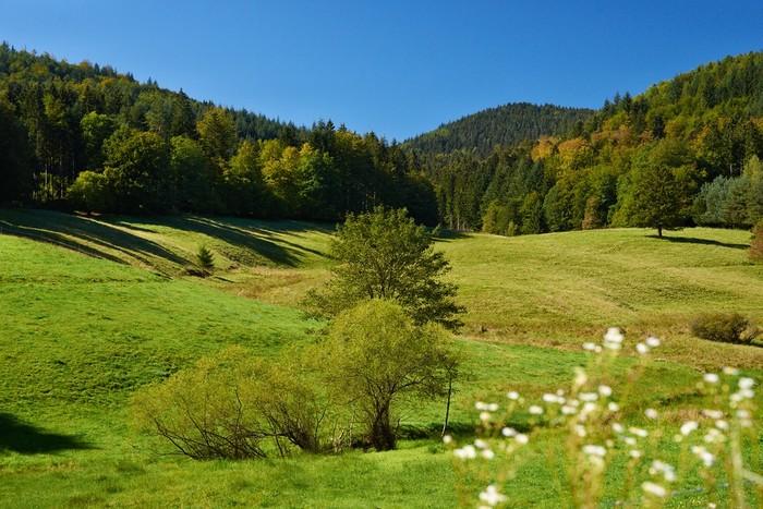 Albtal Landschaft