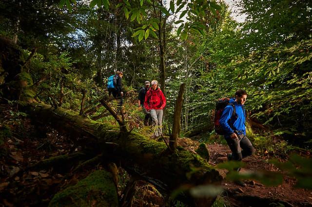 Wanderung auf dem ALBTAL.Abenteuer.Track